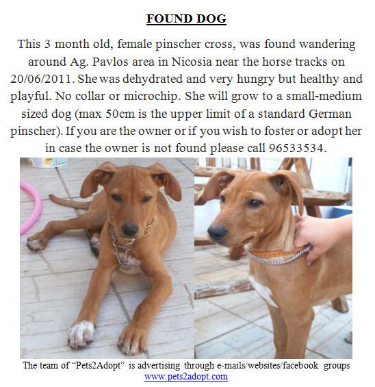 Dog Rescue Fylde Coast