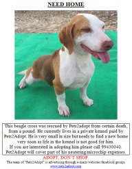 NEED HOME BeagleBoy