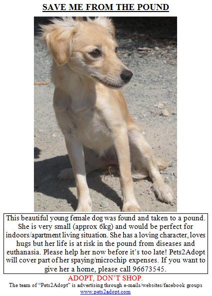 SAVE FROM POUND 27-08-2011 FemaleTerrier