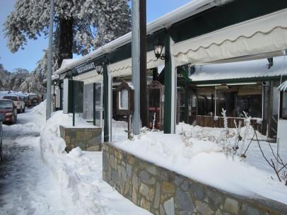 8 Feb 2012 - Troodos mountains, Cyprus (18)