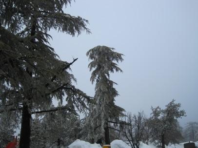 8 Feb 2012 - Troodos mountains, Cyprus (4)