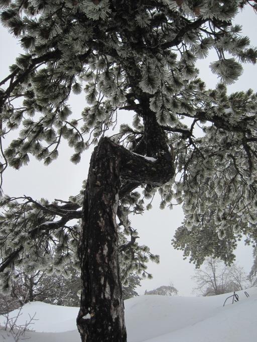 8 Feb 2012 - Troodos mountains, Cyprus (6)