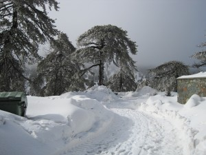 8 Feb 2012 - Troodos mountains, Cyprus (9)