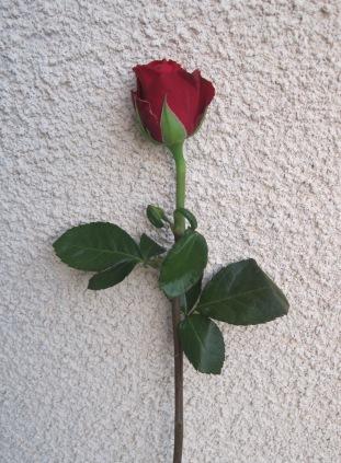 International Woman's Day flower