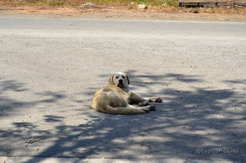 """Four footed, furry friend who was too tired to say """"hello"""""""